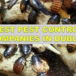 The 6 Best Pest Control Companies in Dublin